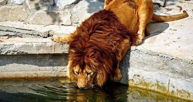 В парк львов «Тайган» пришла вода из Белогорского водохранилища