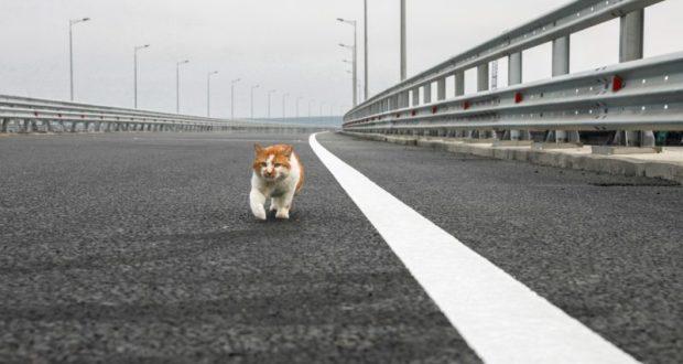 Кот Моста принял объект. Промурлыкал, что прошел все 19 км автодорожной части