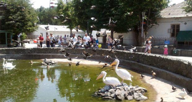 Симферопольский зооуголок превратят в полноценный зоопарк