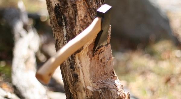 В Крыму возбудили сразу три дела по вырубке деревьев в Красногвардейском районе