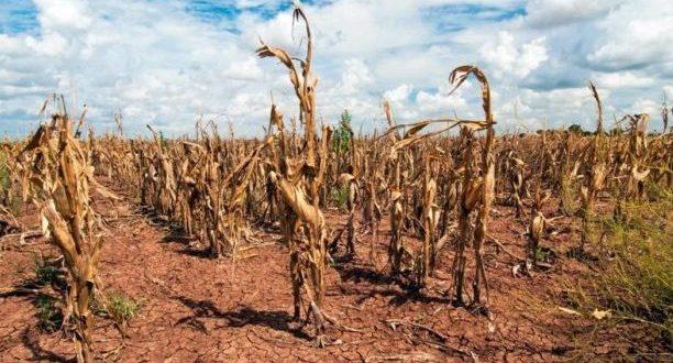 Ещё в двух района Крыма введён режим чрезвычайной ситуации - засуха