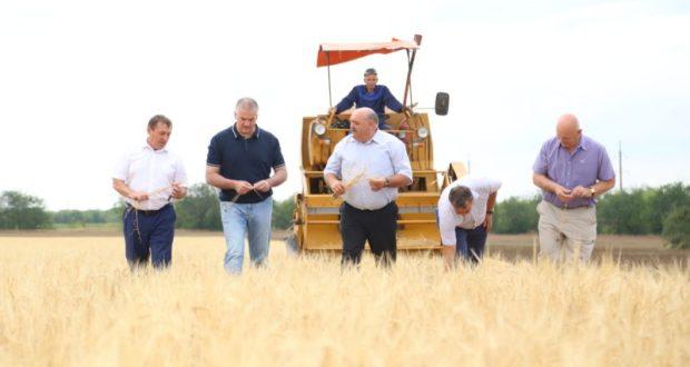 В Крыму учатся выращивать урожай в условиях засухи