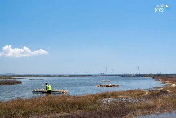 Экология и Крымский мост. Все – по-взрослому