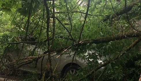 На дороге «Симферополь – Белогорск» на движущийся автомобиль упало дерево