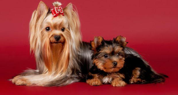 Какие породы собак заводят севастопольцы?