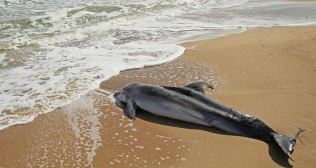 В Крыму зафиксированы жестокие убийства дельфинов