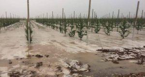 Аграрии Крыма все-таки подсчитали убытки от града в конце июня