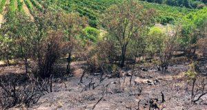 Крымские пожарные спасли от огня виноградники «Массандры»