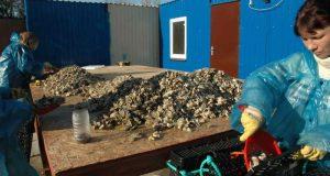 Росрыболовство: в этом году в Крыму вырастили уже почти 100 тонн устриц