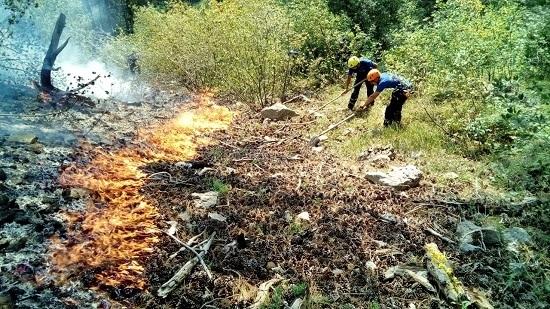 Пожар в урочище Уч-Кош в районе Ялты удалось локализовать