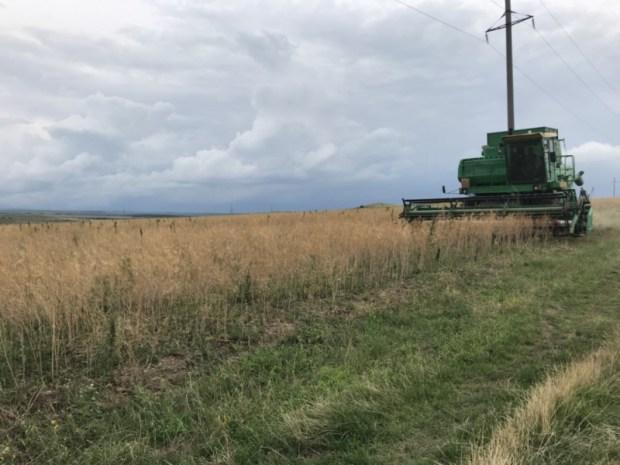 В Крыму уничтожили два поля конопли. Ну и «хозяев полей» тоже нашли