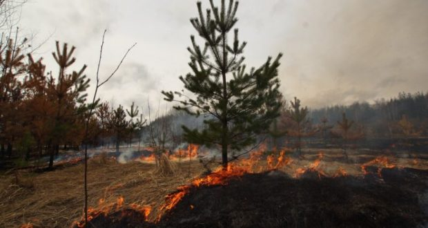 В Крыму поймали поджигателя леса