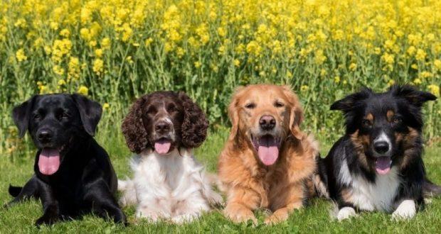 Собака какой породы подойдет именно вам?