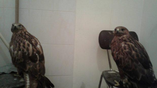 В Судаке госинспекторы-экологи изъяли у фотографа краснокнижных птиц