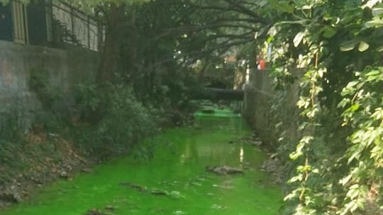 Минприроды Крыма изучает причины изменения цвета воды в реке Быстрая в Ялте