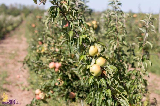 В Крыму создадут засухоустойчивые сады
