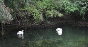 В парке им. Гагарина в Симферополе - новые жители