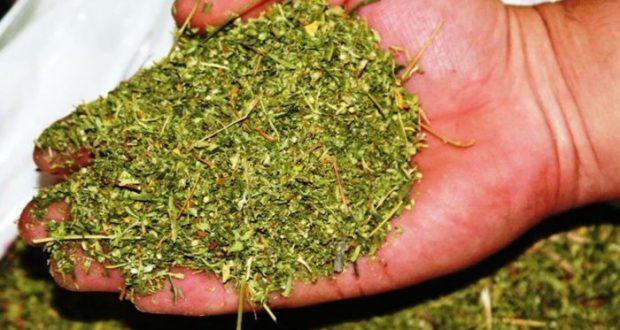 206 граммов марихуаны - это крупный размер. В Первомайском районе задержали наркодилера