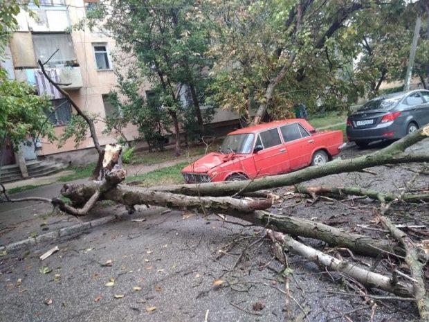 Осень в Крыму. Опадают листья. Падают деревья. Прямо на машины