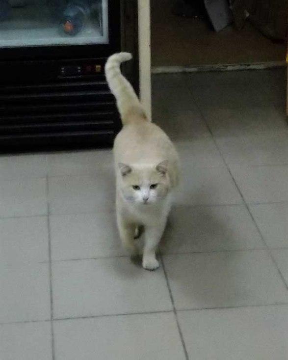 Евпаторийские юнкоры-натуралисты доказали: «звездой» может стать самый обычный «дворовый» кот