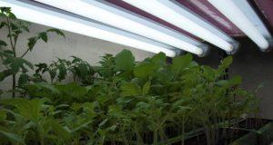 Садоводам и огородникам на заметку: об освещении и досветке растений