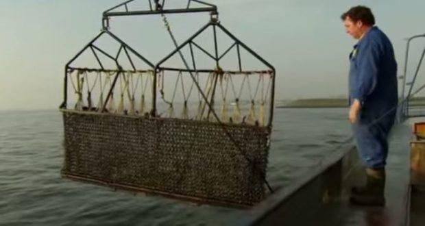 Оказывается, в Севастопольской бухте есть мидии. Их ловят, но за это наказывают
