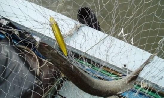 Крымские пограничники обнаружили браконьерские сети
