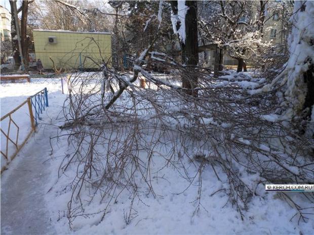 В Керчи пожилую женщину убило дерево