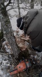 В Кировском районе задержали лесоруба-нелегала
