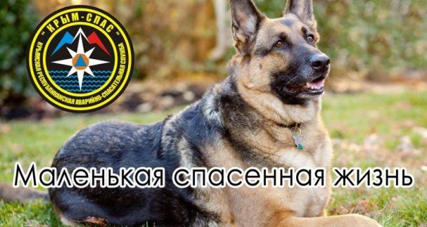 «КРЫМ-СПАС» вытащил собаку из десятиметрового колодца. Каждая спасенная жизнь - бесценна