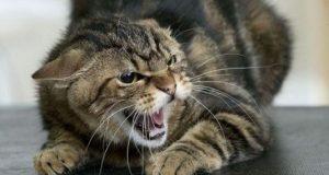 """Бешенство """"шагает"""" по Симферополю. Зафиксированы очередные случаи заболевания у кошек"""