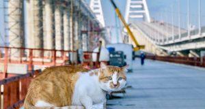 Кот Моста присоединился к поздравлениям с 8 марта