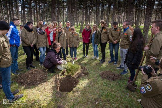Уничтожать? Сохранять и культивировать! Студотряды Крыма высаживают молодые сосны и ели