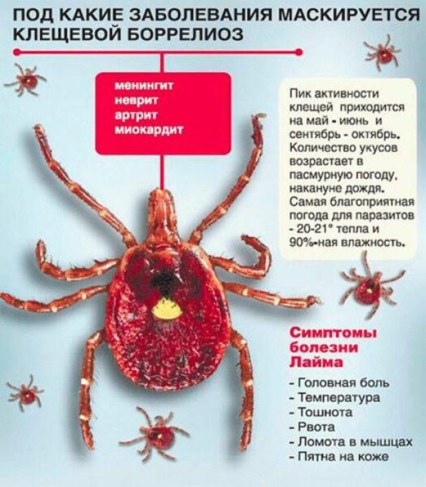 Клещи атакуют. В Крыму выявлены 7 случаев болезни Лайма