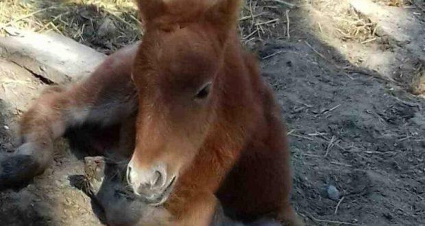 В зоопарке Бахчисарайского парка миниатюр - чудо. Прекрасная Диана родила малышку