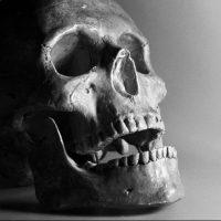 Полиция Крыма устанавливает личность погибшего мужчины - под Алуштой нашли череп