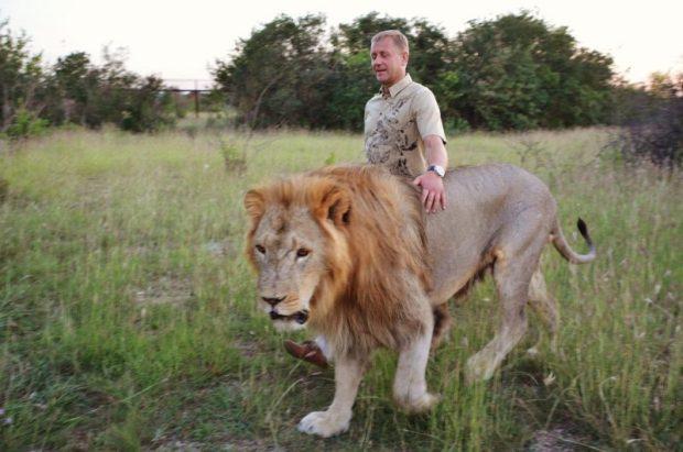 В крымском сафари-парке «Тайган» прокуратура запретила прогулки со львами