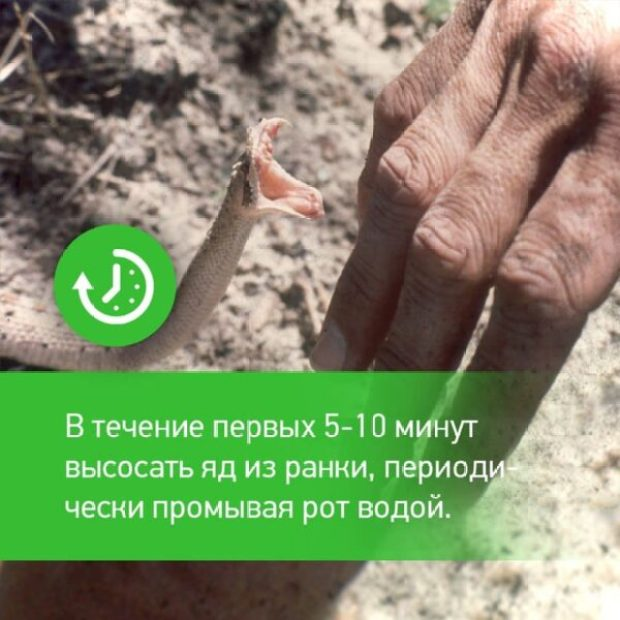 Клещи в Крыму отступают. Наступают змеи
