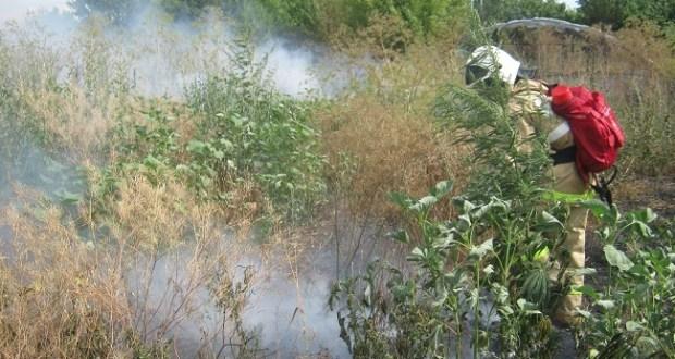 Пожар в крымском селе Ильичево - на 300 кв.м. горела сухая трава