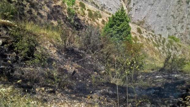 Лесной пожар в районе горы Эчки-Даг пока не потушен