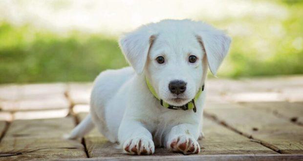 Лакомства для собак: ограничения и особенности