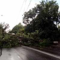 """Непогода оставила свой след в Симферополе: поломанные деревья, битые автомобили, """"речные"""" потоки"""