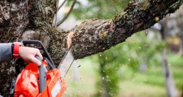 В центре Симферополя проверят на жизнеспособность деревья. Часть - снесут