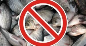 Внимание, крымские рыбаки! Август – пора запрета на лов морских биоресурсов