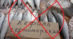 В Крыму до 10 сентября дополнительный запрет на лов черноморской кефали