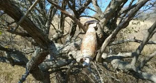 Авиабомба провисела на ветках дерева… 75 лет. Крымские спасатели провели непростую операцию