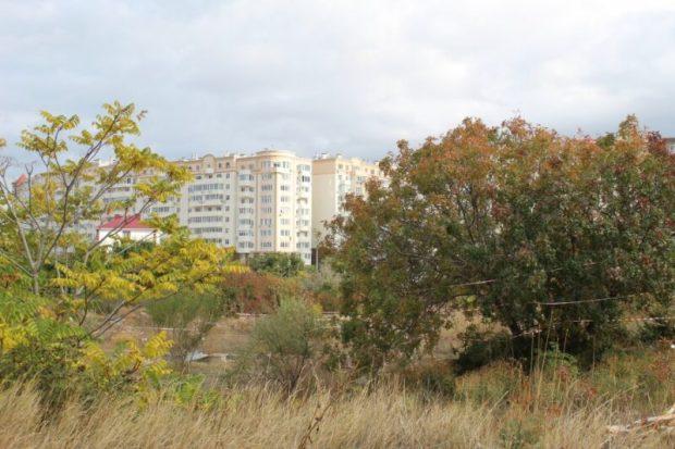 """В Севастополе в районе пляжа """"Омега"""" пытаются сохранить фисташковую рощу"""
