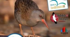 Минприроды приглашает принять участие в Общеевропейском учете птиц – EuroBirdwatch 2019 в Крыму