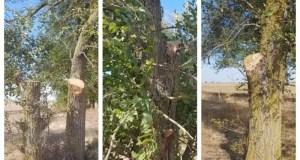Экологи разбираются с фактом повреждения четырех вязов на территории Сакского района