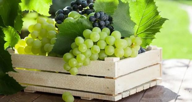Официально: в этом году в Крыму собран рекордный за последние пять лет урожай винограда